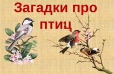 Загадки про домашних и диких птиц с ответами