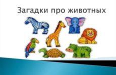Загадки про домашних и диких животных с ответами