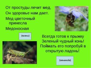 загадки про насекомых с ответами